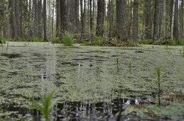 forest bog