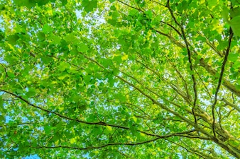 Forest green leaves