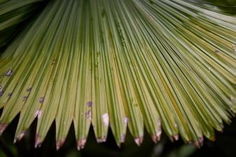森林公園マクロ自然の緑