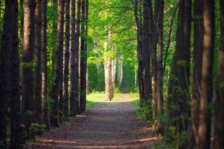 forest scene  trees