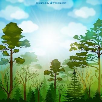 Forest vegetation