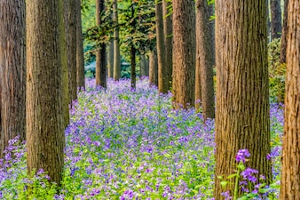 Forest with purple flowers