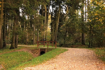 Forest with trees and a wooden railing
