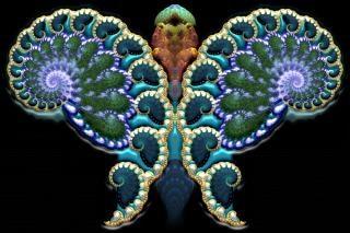 Fractal Butterfly, 2d