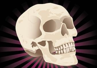 Free Realistic Skull Vector
