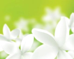 Fresh flower white isolated green