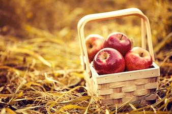 赤い秋の背景に木製のバスケットで新鮮なおいしいレッドリンゴ