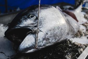 Fresh tuna on the market