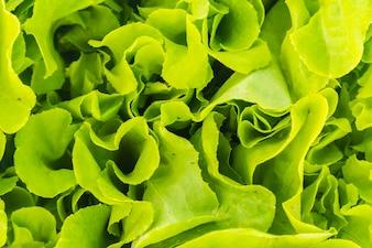 Freshness agriculture organic green fresh