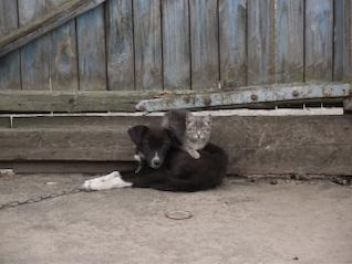 Friendship, cat