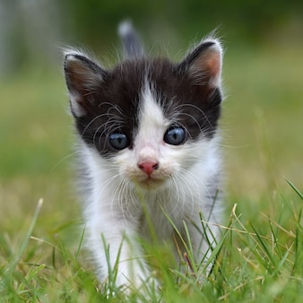 Front view of kitten outdoors