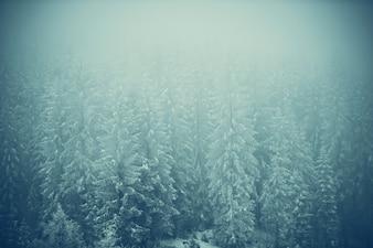 Frozen Forest Landscape