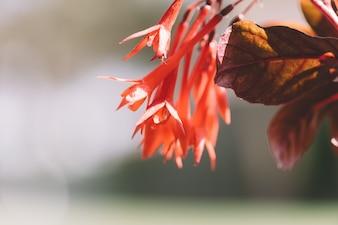 Fuchsia flowers in spring