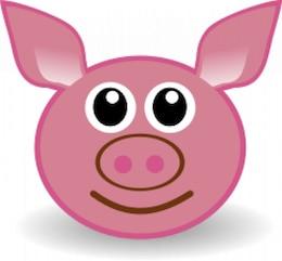 funny piggy face