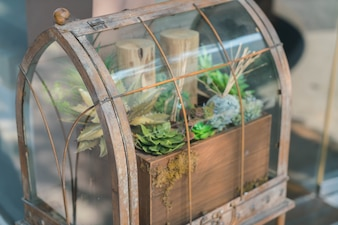 Garden in glass bottle