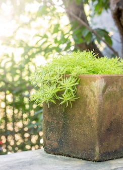 Сад горшечное растение на столе на открытом воздухе