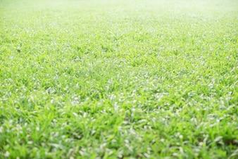 Garden with bright lawn