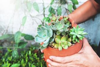 庭師は陶器で多肉植物を作る