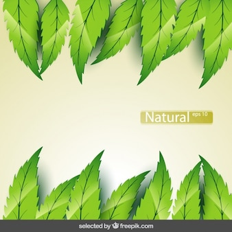 Gradient background with leaves