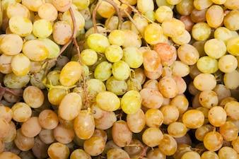 Grapes seen close up