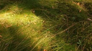 grass   autumn