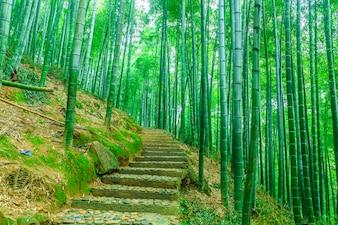 草ジャパン葉木美しい風景