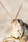 grasshopper  hopper
