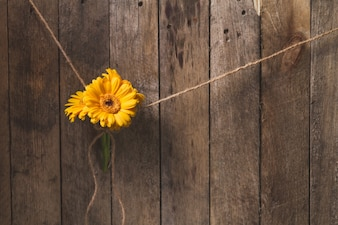 Great wooden background with yellow flowers tied