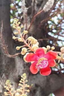Green closeup bangkok blooming tree