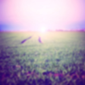 Green farm field unfocus