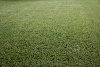 緑地開発用地