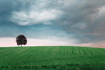 Green field with a tree