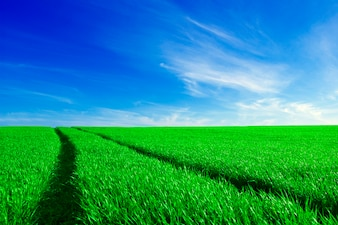 Green field with tire marks