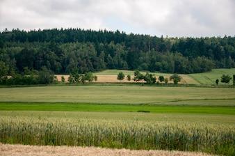 зеленые поля в чеки