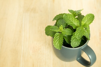 Green fresh mint on the wooden table.