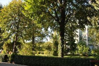 green garden  garden