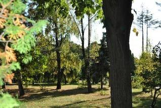 green garden  trees  bushes
