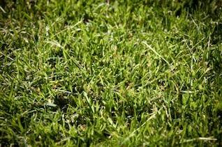 green grass texture  green