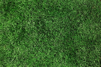 Green grass texture close-up