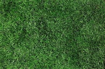 緑色の草のテクスチャのクローズアップ