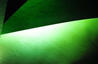 green leaf texture  plant