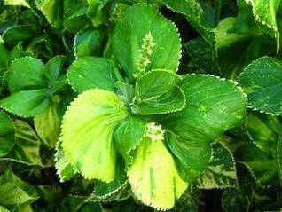 green leaves  fresh  plants