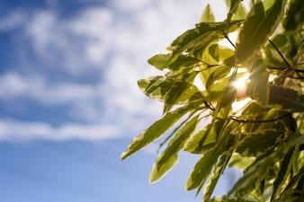 青い空に緑色の葉、バックライト。