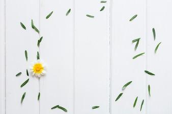 緑の葉と白い表面のかわいい花