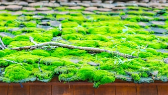 Green moss on the wood roof .