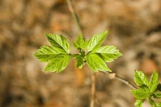 Green plant , life
