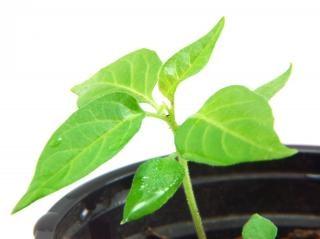 Green plant, gardening