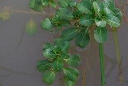 Green plant, leafs