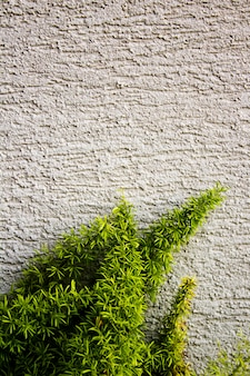 Green plant growing on a wall