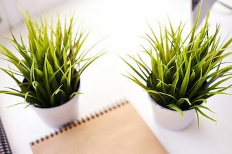 オフィスで緑の植物
